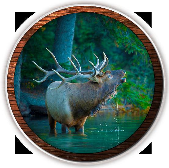 fvwd-elk