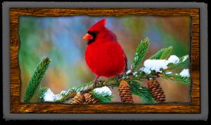 songbird-cardinal-fvwd