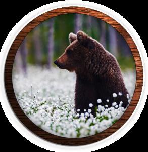 fvwd-bear-flowers