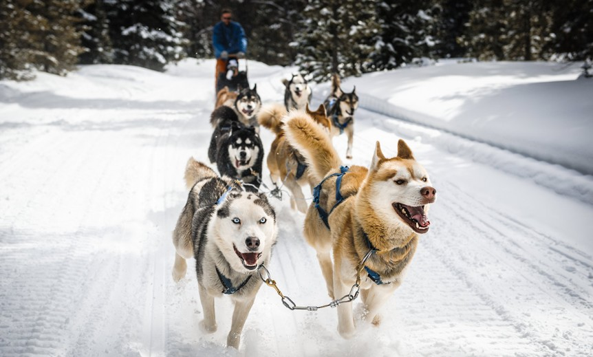 WI Dog Sledding,Winter dog sledding,fox valley web design,graphic designers in WI,wisconsin photographers, custom programming,WordPress developers,Things to do in wisconsin