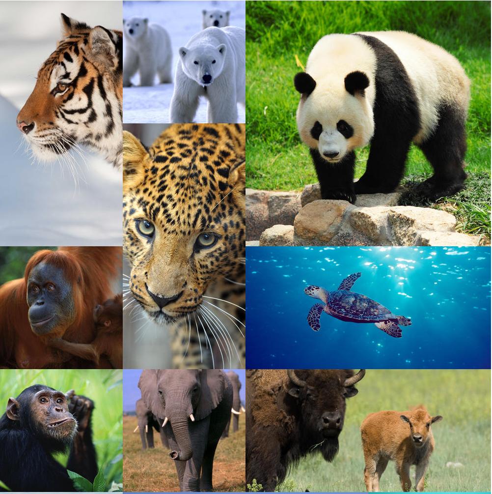 support wwf,endangered species,endangered animals, World Wildlife Fund