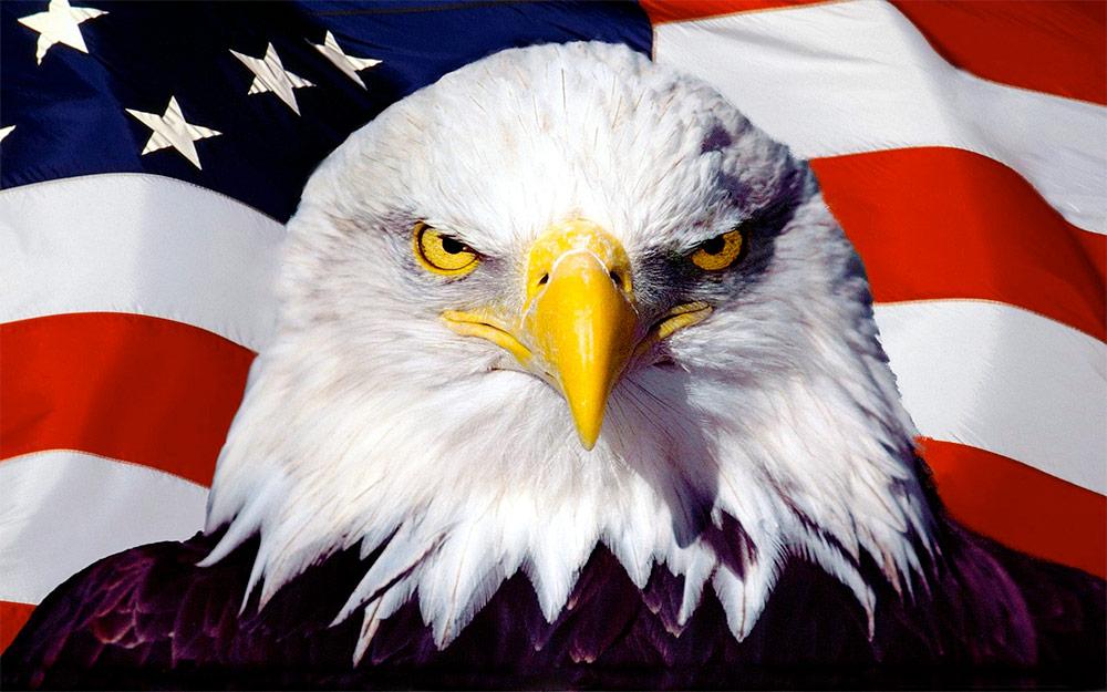 American Eagle Usa Flag Fox Valley Web Design Llc