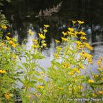 wisconsin wild flowers, Peshtigo River, Marinette County, above wisconsin,Wisconsin,drone operators,wi drone pilots