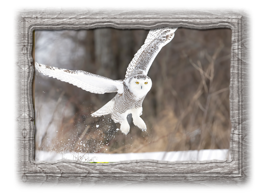 fox valley web design,fvwd,wisconsin website design,affordable websites,wisconsin made,usa web design,american website developers, snowy owl hosting package
